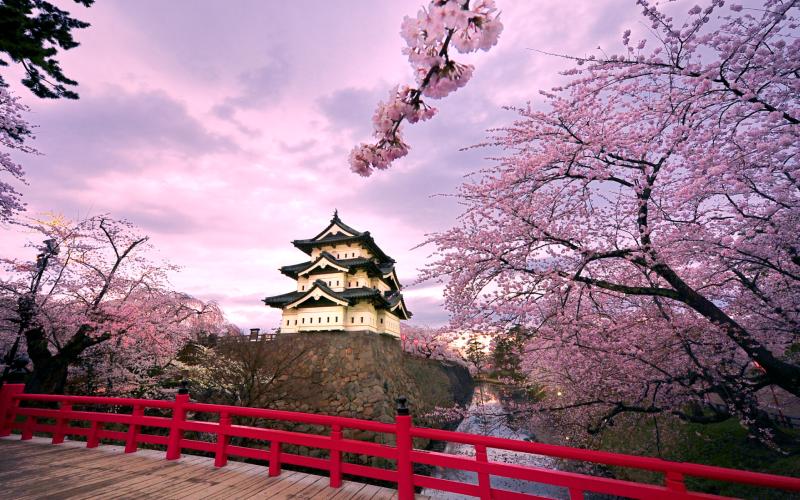 Jinhae Cherry Blossom Festival, 2015