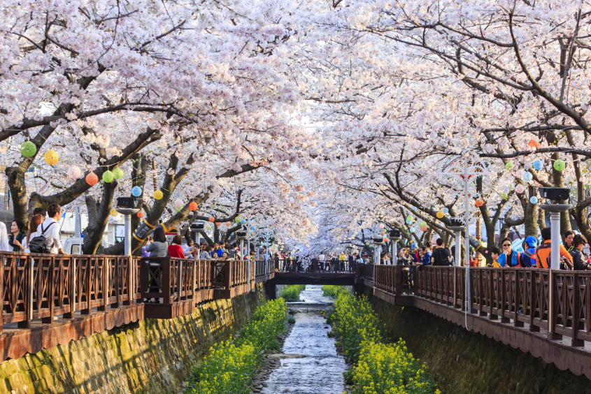 Teaching English in Daejeon, Korea