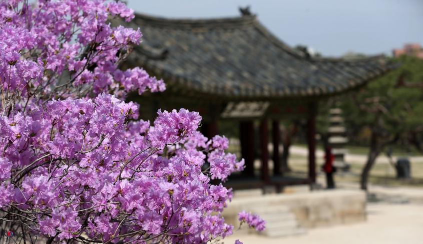 Teach English in Daegu City | Great School, Great Pay