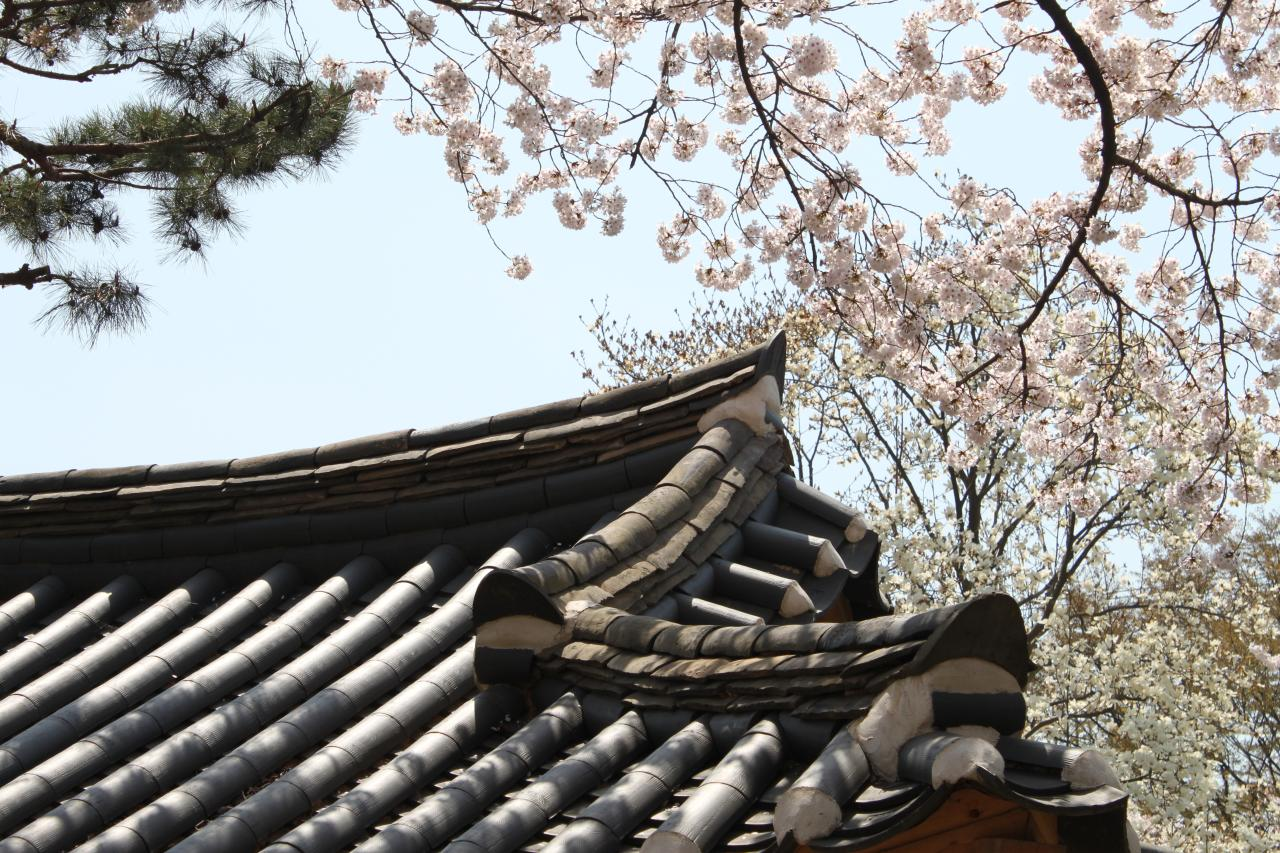 Teach in Korea | ESL job in Daegu